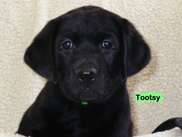 Tootsy