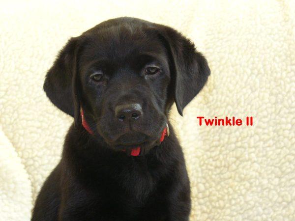 Twinkle II